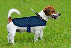 100 Dog Clothes Patterns Free Dog Clothes Tutorials Patterns To Sew