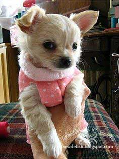 Make A Quick No Sew Sweater for a Chihuahua Puppy or Small Dog - Tutorial