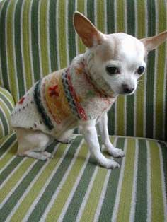 How to Make a Recycled Dog Sweater