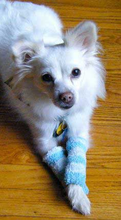 Upcycled Doggy Leg Warmers