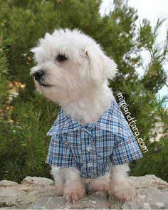 picture about Free Printable Sewing Patterns for Dog Clothes identify 84 Pet Clothing Behaviors - Absolutely free Puppy Garments Tutorials